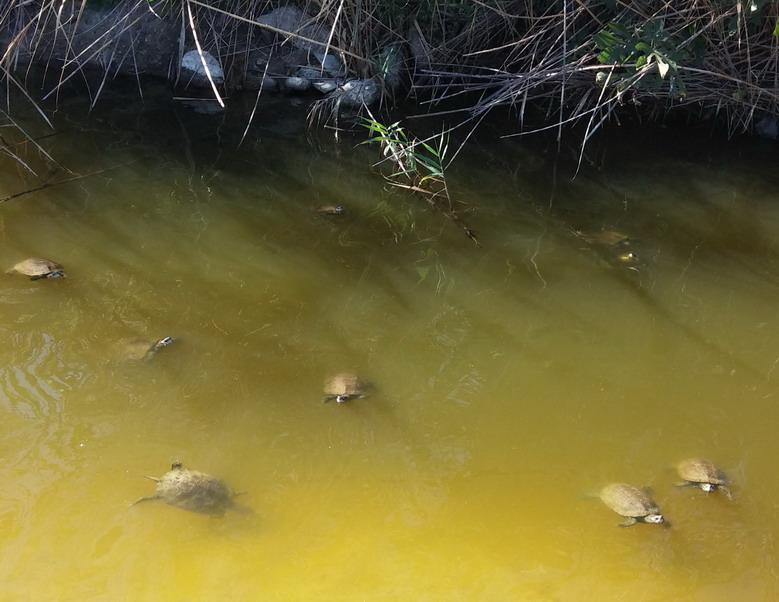 Название: Болото с черепахами.jpg Просмотров: 178  Размер: 115.7 Кб