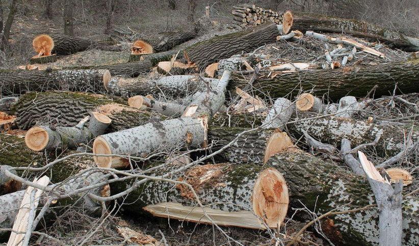 Название: Спиленные деревья.JPG Просмотров: 597  Размер: 194.8 Кб